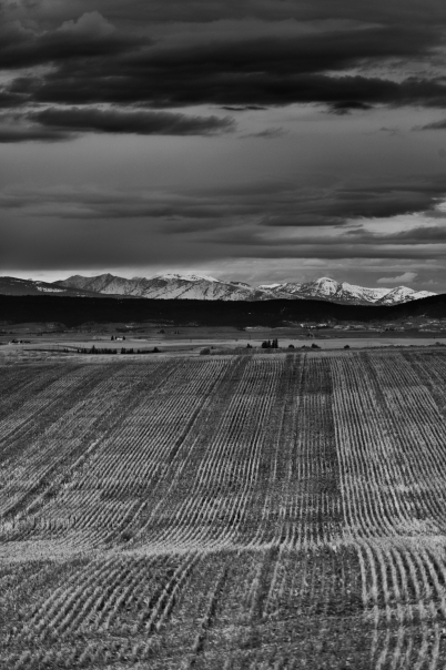 Lined crops stretch for miles during the evening hours alongside highway 33 in Eastern Idaho, just West of the Teton Range.