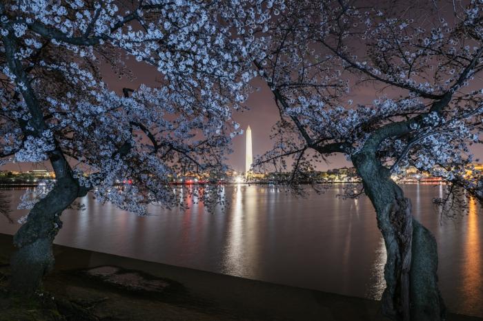 gm_blossoms